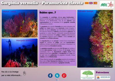 Gorgonia roja