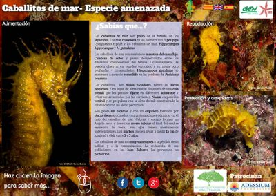 Seahorses, threaten species