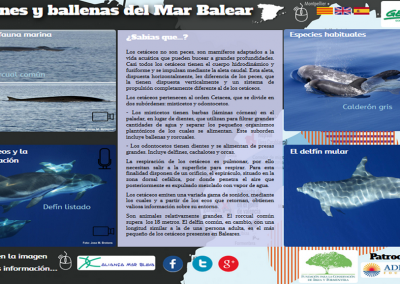 Dolphins and whales from the Balearic Sea