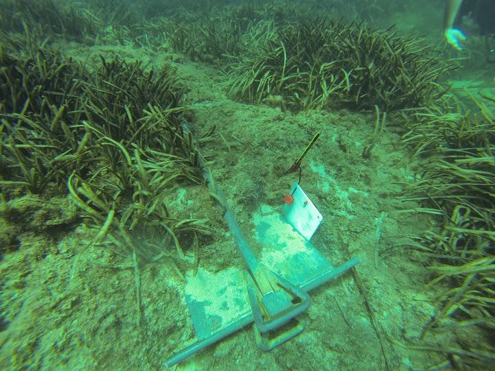 Situació ambiental del fondeig a Eivissa Estiu 2014